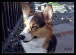 corndog cabernet's Avatar